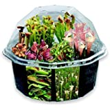 S&S Worldwide Carniverous Creations Plant Growing Craft Kit