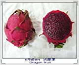 20 PURPLE DRAGON FRUIT (Pitaya / Pitahaya / Strawberry Pear) Hylocereus Undatus Cactus Seeds