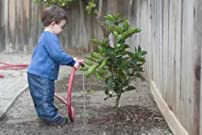 Boy Watering Tree