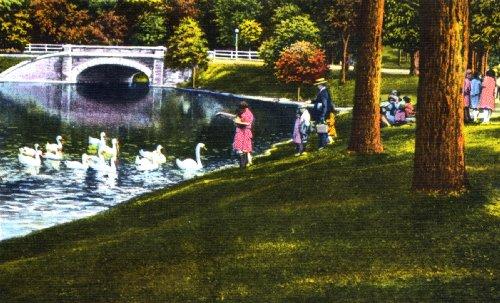 Swans, Roger Williams Park, Providence, Rhode Island
