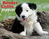 Just Border Collie Puppies 18-Month 2015 Calendar