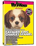 CAVALIER KING CHARLES SPANIEL DVD! Includes Dog & Puppy Training Video