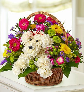 Same+Day+Flower+Delivery+1-800-Flowers+a-DOG-able+in+a+Basket