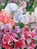 Flower - Sweet Pea - Heaven Scent Mixed - 40 Seeds