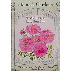 Cosmos Double Rose Bon Bon Seeds 50 Seeds