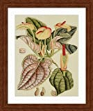 """Botanical Fantasy III"" framed floral poster print, finest quality print, solid wood walnut finish frame/museum matted 17"" x 20"""