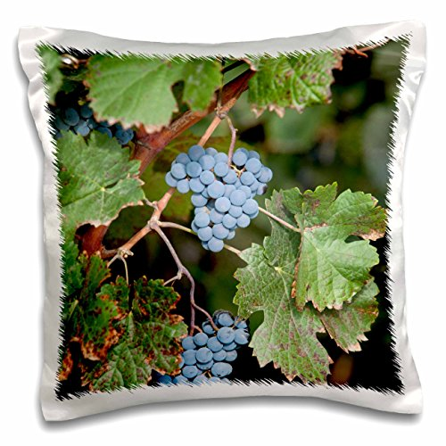 danita-delimont-grapes-china-ningxia-merlot-grapes-hang-on-the-vine-helan-mountain-winery-16x16-inch
