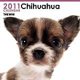 チワワ 2011年 カレンダー