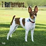 Rat Terriers 2015 Calendar