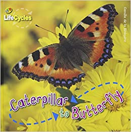 Caterpillar to Butterfly (Lifecycles): Camilla De la ...
