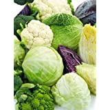 Mixed Seeds Combo - All Separate Pack - Cauliflower, Cabbage, Romanesco, Chinese Cabbage, Broccoli, Brussels Sprouts...