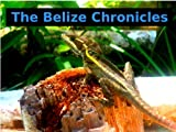 Belize Chronicals Part #2 (The Belize Chronicles)