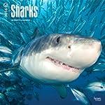 Sharks 2016 Calendar