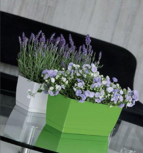 alto-brillo-interior-y-hierbas-para-maceta-amplia-rectangular-maceta-con-platillo-gama-de-colores-gr