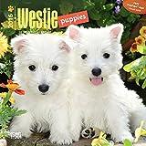 West Highland White Terrier Puppies 2016 Calendar