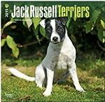 Jack Russell Terriers (Intl) 2015 Squ...