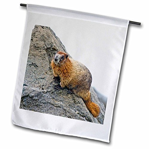 usa-washington-du-nord-cascades-np-cuivre-ridge-adulte-polygone-marmot-305-x-457-cm-decoratif-double