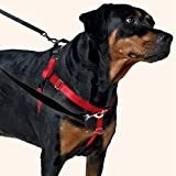 """Freedom No-Pull Dog Harness Training Package with Leash, Teal Medium (1"""" wide)"""