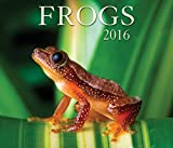 img - for Frogs 2016 book / textbook / text book