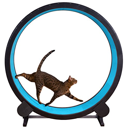 Cat Exercise Wheel (Blue)