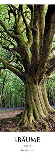 baume-2017-trees-wald-streifenkalender-xxl-25-x-70-landschaftskalender-naturkalender