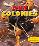 img - for Ant Colonies (Animal Armies (Powerkids)) book / textbook / text book