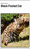 Black Footed Cat: Interesting Little Wild Cat (English Edition)