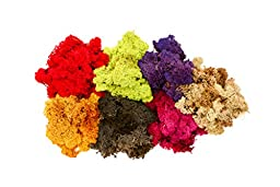 Hinterland Trading Rainbow Reindeer Moss Collection 7 Colors 3 Ounces Each
