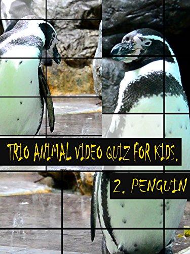 Trio Animal Video Quiz for Kids. 2. Penguin