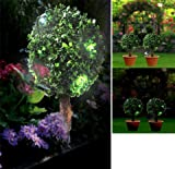 Set of 2 Bay Trees Topiary Trees with Solar LED Lights (1030) Light up your garden. No plugs! Ideal all year round.