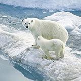 Polar Bear: Picture Book About Polar Bear For Kids