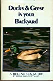 Ducks and Geese in Your Backyard: A Beginner's Guide