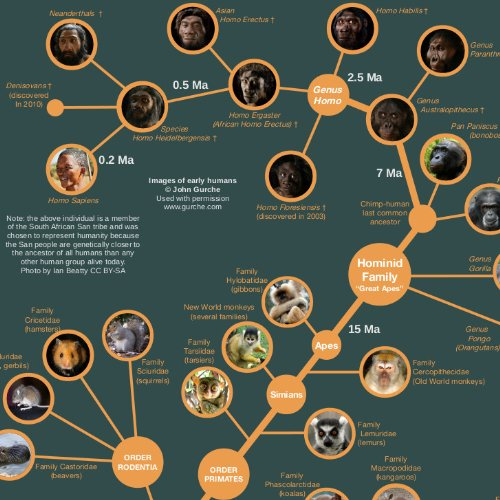 Evolution & Classification of Life Poster 61x91cm