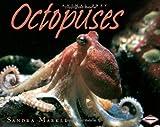 Octopuses (Animal Prey)