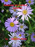 PUSHING UP PURPLE DAISIES (Teddy Books)