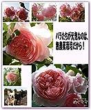 バラたちが元気なのは、無農薬栽培だから!