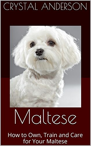 Free Kindle Book : Maltese: How to Own, Train and Care for Your Maltese
