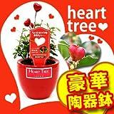 ハートツリー 赤いハートの実がなる木【赤い陶器鉢セット】