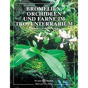 Bromelien, Orchideen und Farne im Tropenterrarium (Terrarien-Bibliothek)