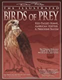 Illustrated Birds of Prey: Red-Tailed Hawk, American Kestral, & Peregrine Falcon: The Ultimate Reference Guide for Bird Lovers, Woodcarvers, and Artists (The Denny Rogers Visual Reference series)