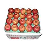 (訳あり) 菅野アップル農園 サンふじ とっても甘い 蜜入りりんご 福島県羽山産 ご家庭用 小ぶりな Mサイズ 10kg ランキングお取り寄せ