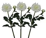 Pollination Dahlia Artificial Flowers(White,Set of 3)