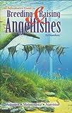 Breeding & Raising Angelfishes