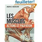 Les Muscles : actions et palpations