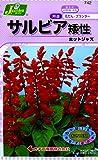 カネコ種苗 草花タネ742 サルビア 矮性ホットジャス゛ 10袋セット