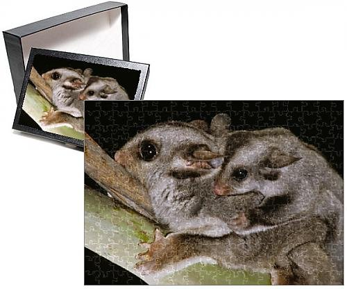 Sugar Glicer Jigsaw Puzzle of Sugar Glider - With young on back