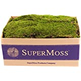 SuperMoss (21508) Sheet Moss Preserved, Fresh Green, 3-5lbs (20-24 sq. ft.)