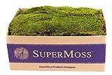 SuperMoss (21508) Sheet Moss Preserved, Fresh Green, 3-5lbs (20-24 sq. ft.)