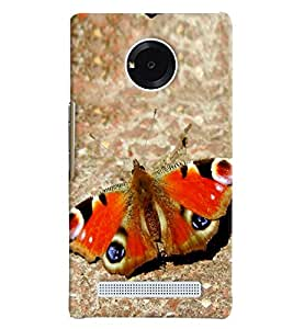Blue Throat Butterfly Inspired Hard Plastic Printed Back Cover/Case For Micromax Yu Yuphoria