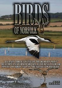 Birds of Norfolk